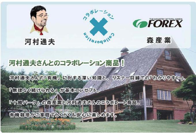 Forex wp theme
