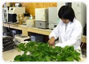 緑化基盤材の開発・製造 研究開発