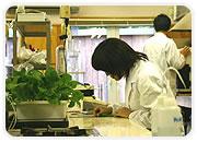 緑化基盤材の開発・製造 成分分析などの研究
