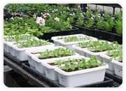 緑化基盤材の開発・製造 商品開発や素材研究