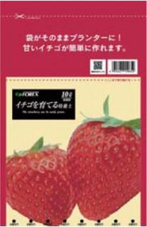 イチゴを育てる培養槌